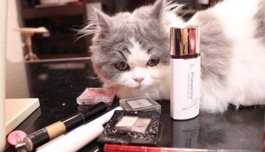 子猫が妹のメイクを邪魔しまくる姿がかわいい